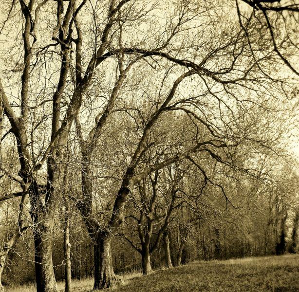 arbres2.jpg