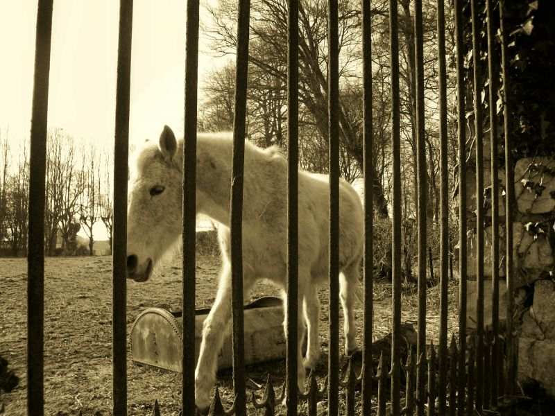 cheval21.jpg