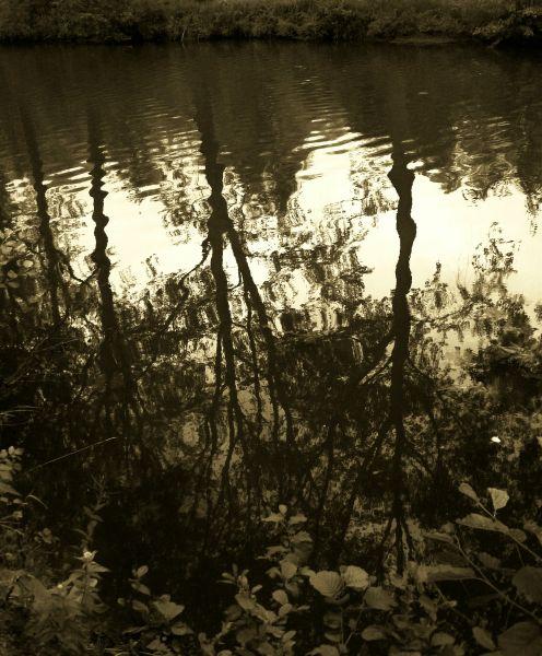 reflet.jpg